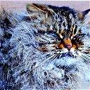Kot Kot