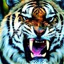 Tigr 888