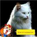 Белый Кот))