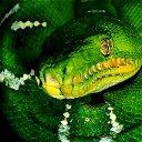 Просто Змея