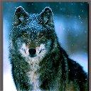 Волчица Одинокая