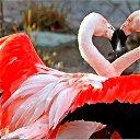Любовь Сливная