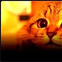 Кот Горный Пик.